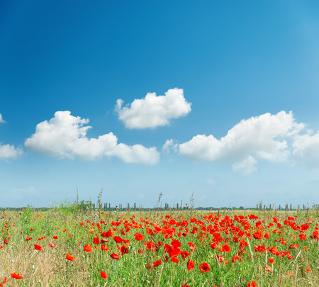 llanura: red poppies on field and white clouds in blue sky
