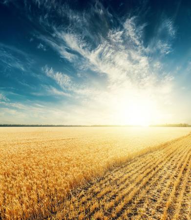 field sunset: dramatic sunset over harvesting field Stock Photo