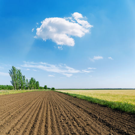 plowed field in spring and white cloud in blue sky