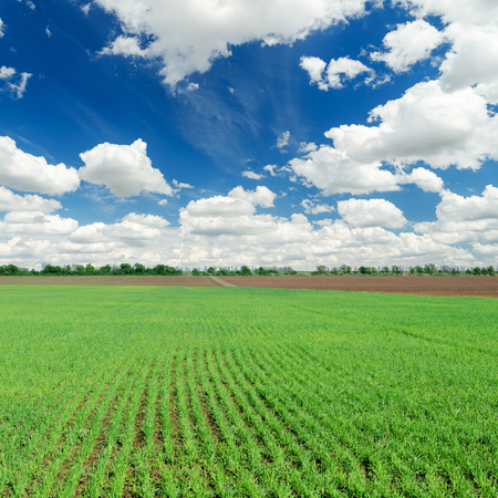 blue cloudy sky: spring green field and blue cloudy sky