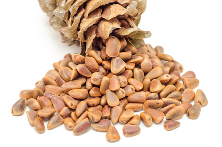 Cone and Nuts of Siberian Cedar Pine (Pinus sibirica) Stock Photo