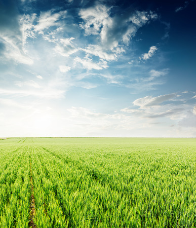 sunset in dramatic sky over green agriculture field in spring