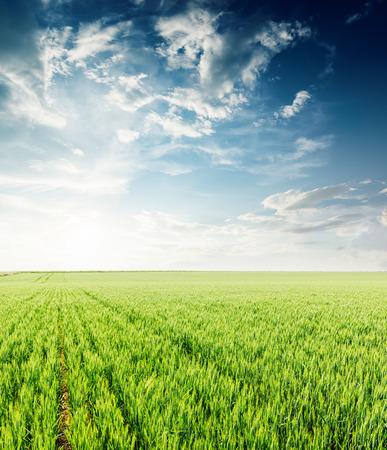 zachód słońca na dramatycznym niebie nad zielonym polem rolnictwa na wiosnę