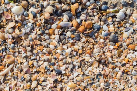 sea beach with shells closeup. Detailed texture or background