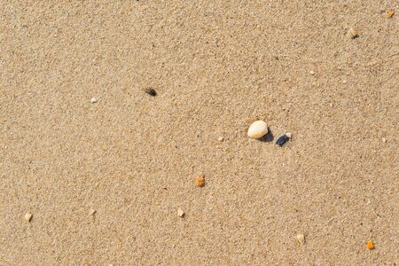 yellow sand closeup with shell as background or texture, wallpaper Reklamní fotografie