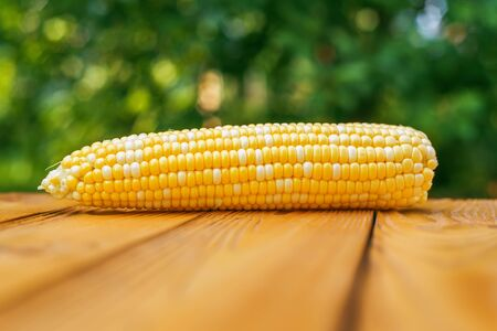raw yellow corn on wooden background