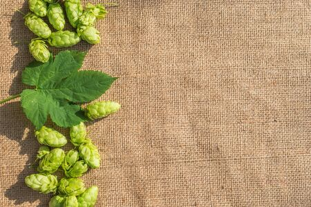 green hop cones and leaves on a textile