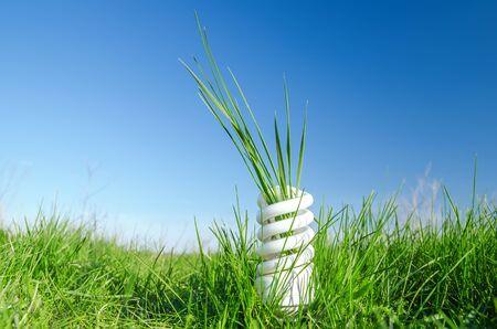 Energooszczędna żarówka spiralna w zielonej trawie