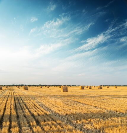 golden straw bales in agriculture field in sunset time 스톡 콘텐츠