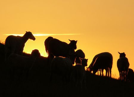 The herd of sheeps on a hill. Stock Photo - 2793285