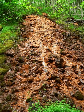 streamlet: The streamlet into a forest.