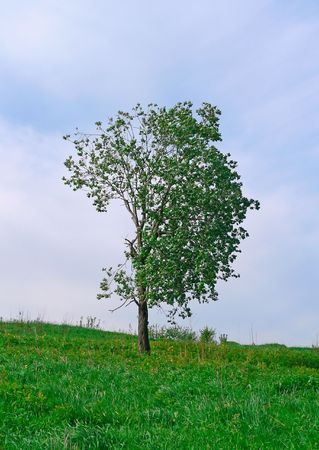 wilds: The single tree on the knap.