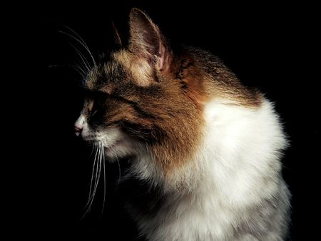 immobility: Portrait of the cat into darkness. Stock Photo