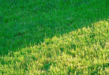 grassplot: The grass-plot: light and shadow.