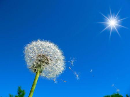 begining: Il tarassaco sullo sfondo blu del cielo. Archivio Fotografico
