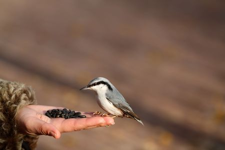 The bird on the hand in the park. Stock Photo - 5962824