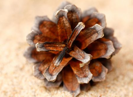 The pinecone on a sand close-up. Stock Photo - 6069290