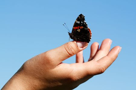 The butterfly sit on a hand. photo