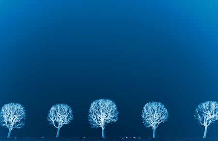 free space: The line of trees against the blue sky. Effect as negative.