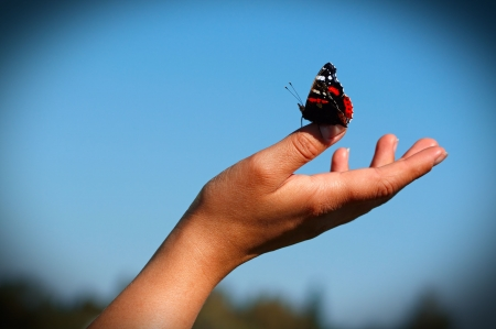 The butterfly sit on a hand.