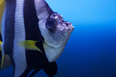 The exotic tropical fish close-up. Stock Photo - 6755385