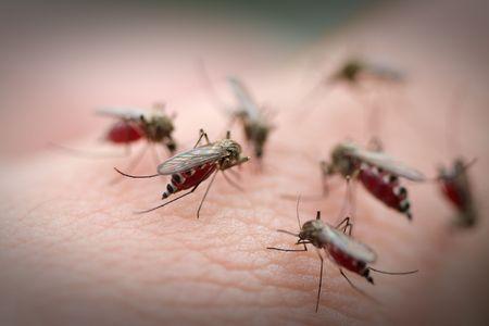 人間の皮膚に多くの蚊。