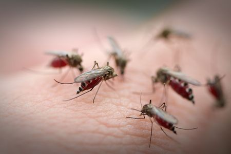 Many mosquitos on a human skin.