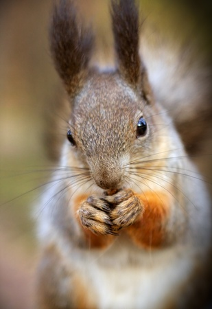 The portrait of a squirrell. Stock Photo - 8654127