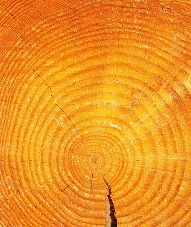 The slice of wood timber natural background. Stock Photo - 9234150