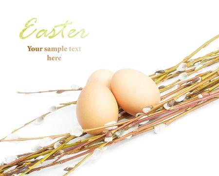 猫-柳とイースターの卵。露出の効果。
