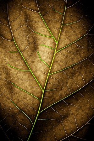 The leaf close up. Abstract background.