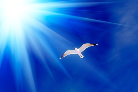 The seagull against the sky. Stock Photo