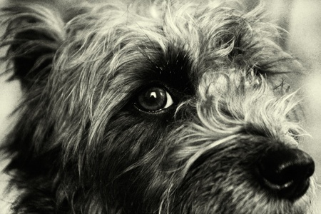 Portrait of the mongrel dog.