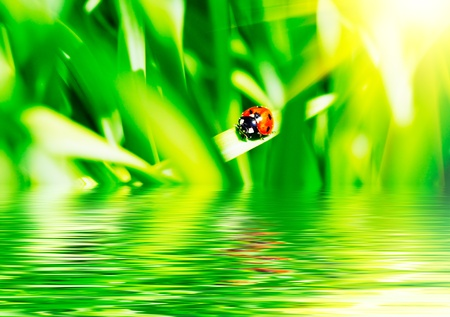 The ladybird on a grass. photo