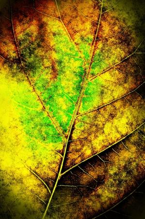 The grunge leaf background. photo