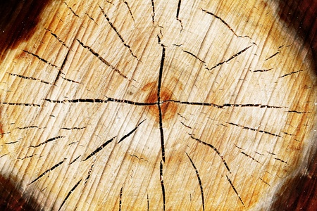 The slice of wood timber natural background. Stock Photo - 11279777