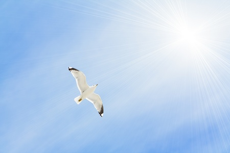The seagull against the sky. photo