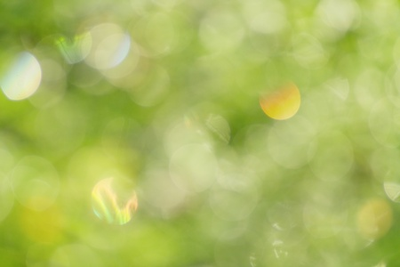The natural bokeh into forest.