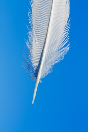 The white feather against blue sky. photo