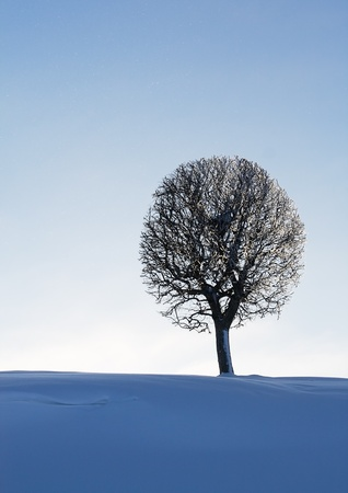 The lonely tree in winter. photo