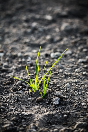 organic concept: young plant on the ground Stock Photo