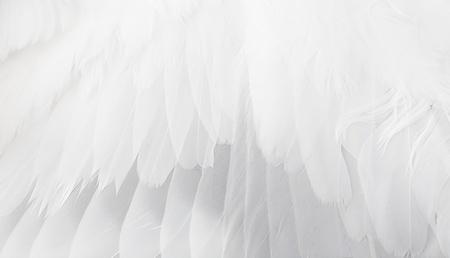 白い翼をクローズ アップ。