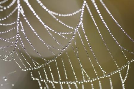 The Spider Web close up. Zdjęcie Seryjne - 12056128