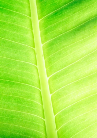 The leaf close up. Abstract background. Stock Photo - 12056140
