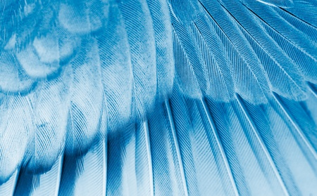 The wing of the bird closeup. X-ray effect. photo