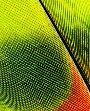 feather of macaw close up photo