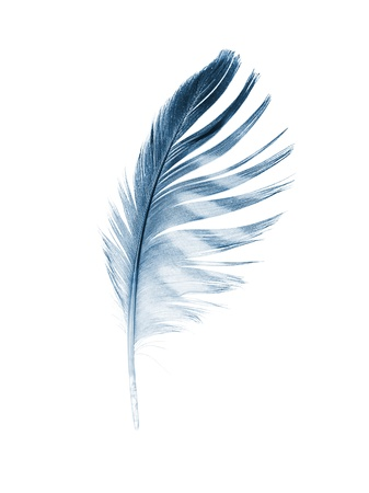 The feather of a Merlin on white. X-ray effect. Stock Photo