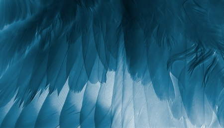The birds wing close up. X-ray effect.