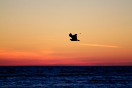 lonely seagull on a sunset photo