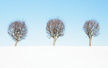 The line of trees against the blue sky.